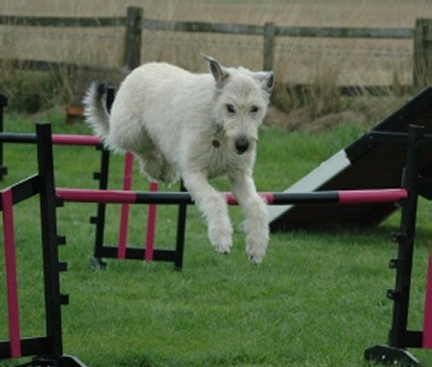 Agility Equipment For Dogs Sale Uk